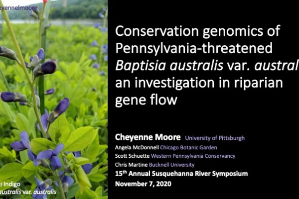Conservation genomics of Pennsylvania-threatened Baptisia australis var. australis: an investigation in riparian gene flow