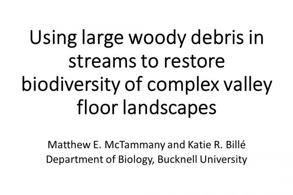 Using large woody debris in streams to restore biodiversity of complex valley floor landscapes