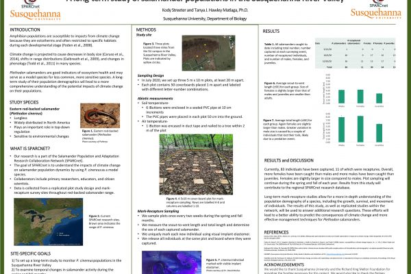 A Long-term Study of Salamander Populations in the Susquehanna River Valley