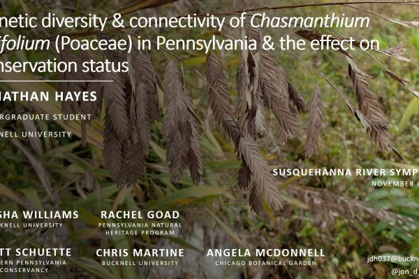 Genetic diversity & connectivity of Chasmanthium latifolium (Poaceae) in Pennsylvania & the effect on conservation status